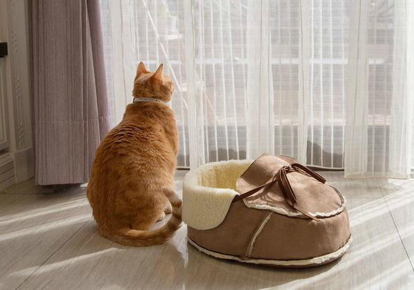 Napping-JoJo-cat-products