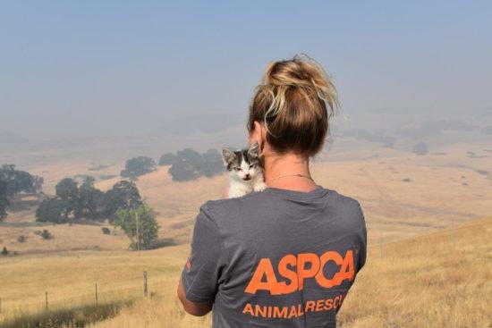 aspca-animal-rescue-california-wildfires