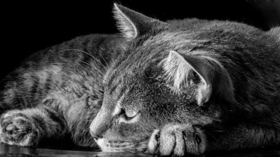 euthanasia-guilt