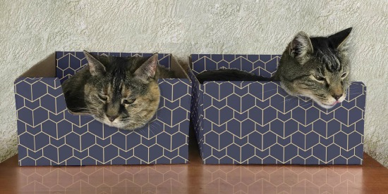 purrfect-cat-box-two-cats