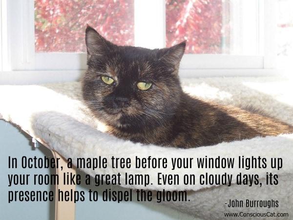 maple-tree-cat