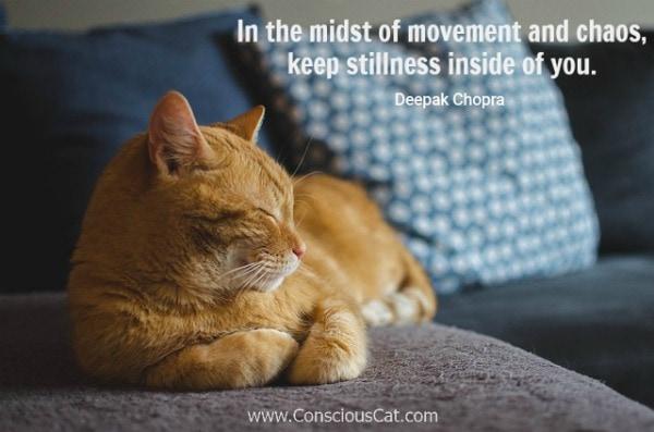 stillness-cat