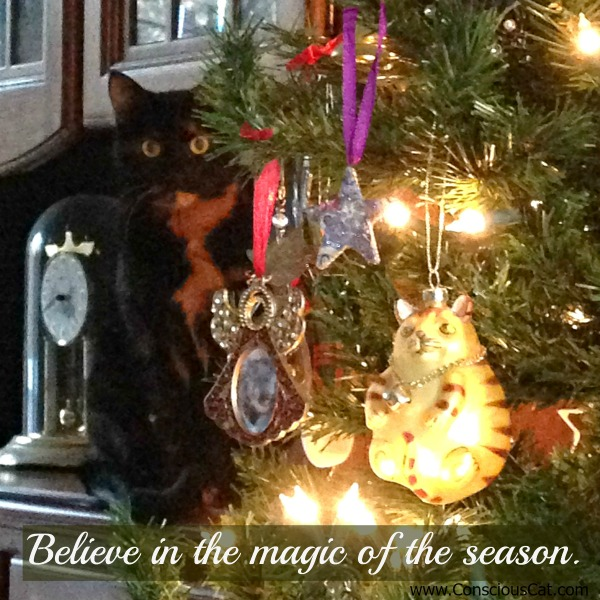 cat-christmas-tree-believe
