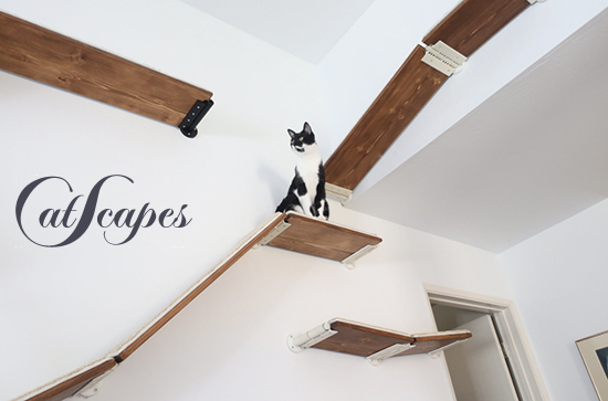 cat-climbing-shelves