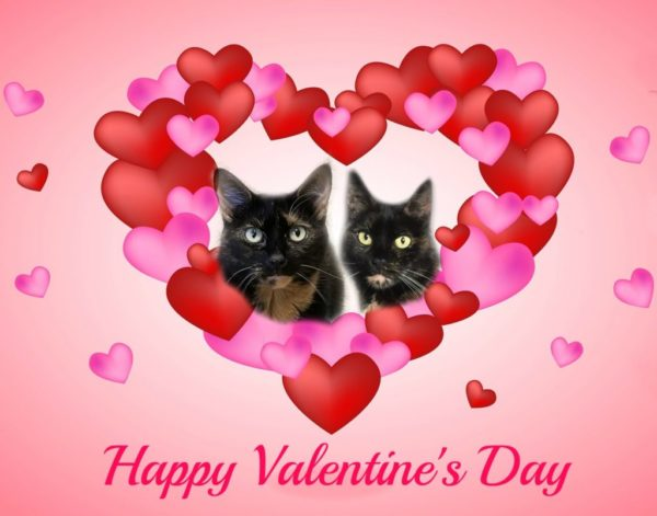 valentines=day-cats