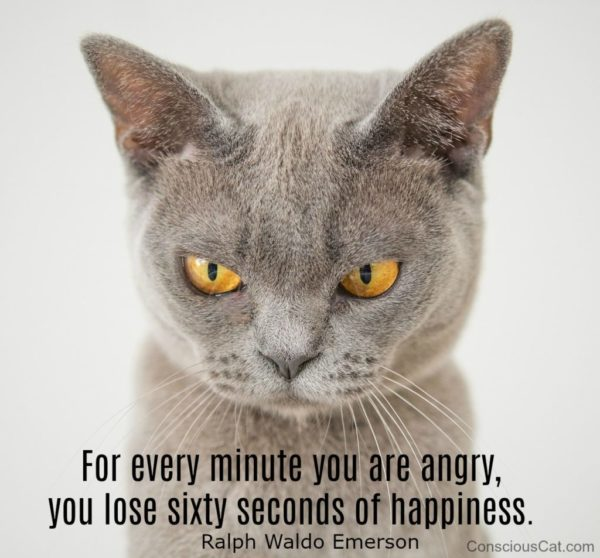 angry-minute-happiness