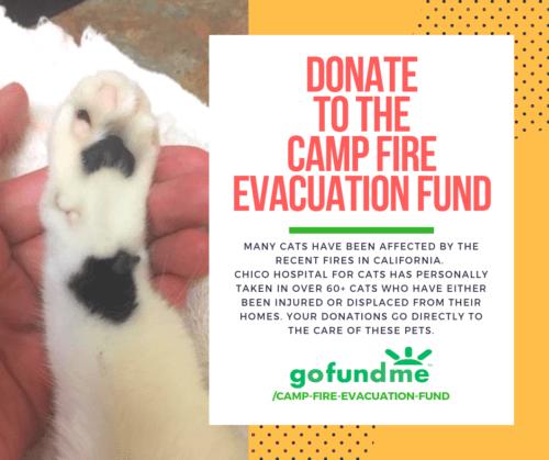 chico-hospital-for-cats-gofundme