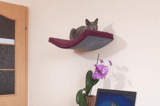 padded-cat-shelf
