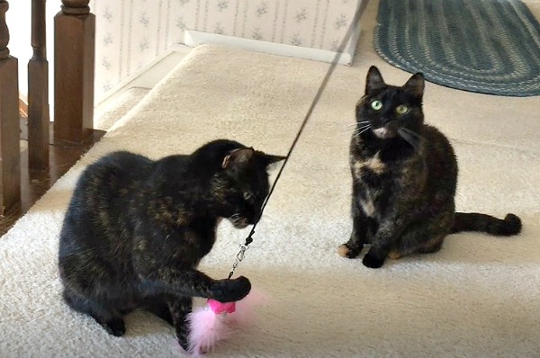 cat -wand-toys