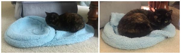 blancat-cat-blanket-cat-bed