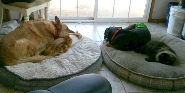 cats-and-dogs-sleeping