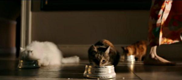 Bohemian-Rhapsody -cats