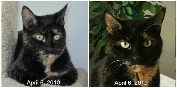 Allegra-9th-adoption-anniversary