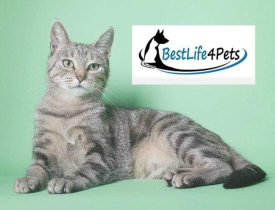 best-life-4-pets