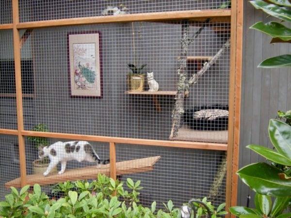 catio-cat-enclosure-tripawd-cat-walking-shelf-catiospaces