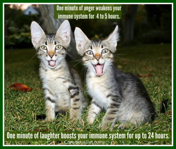 laughter-cats