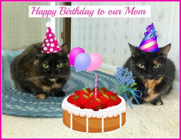 Tortoiseshell Cats Birthday Cake