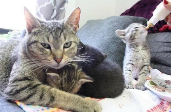 cat-with-kittens