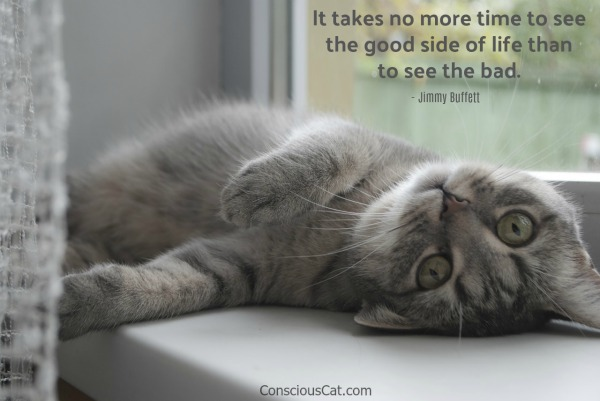 cat-jimmy-buffett-quote