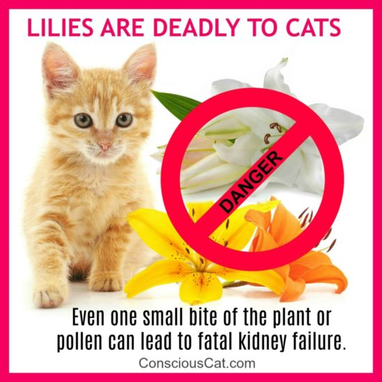 eas ter-lilies-cats-deadly-toxic