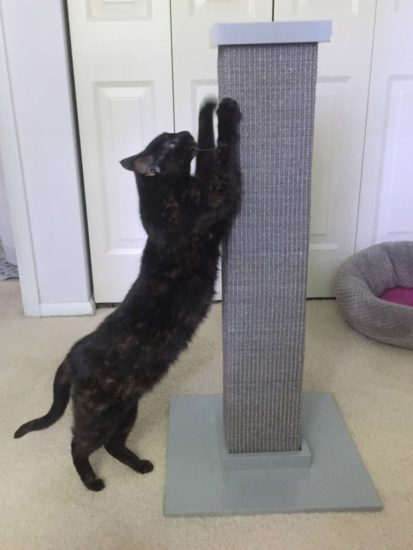 grey-scratching-post