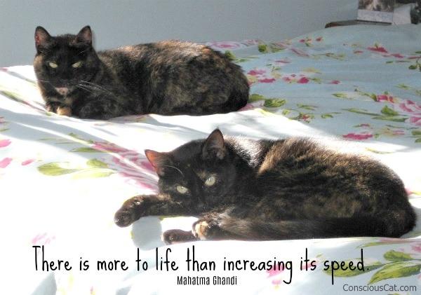 tortoiseshell-cats-sun-bed