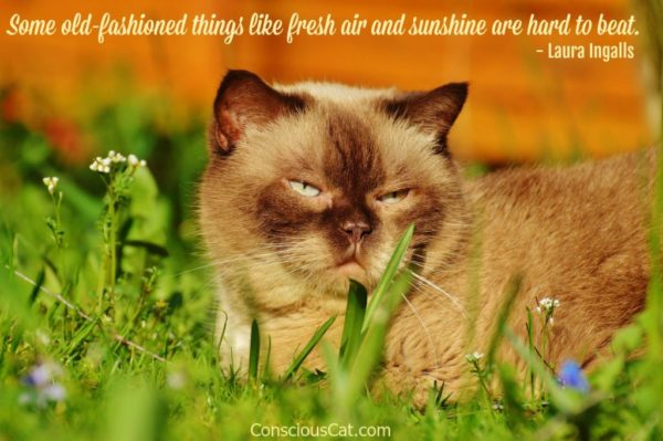 cat-sunshine