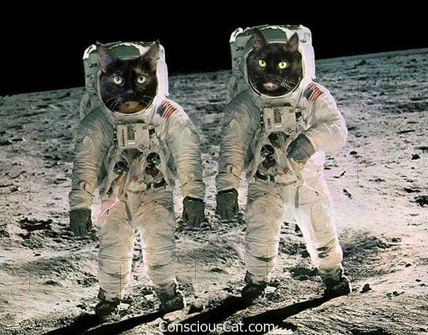 cat-astronauts-apollo-11-moon-landing