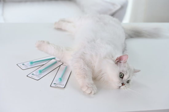 cat-toothbrush