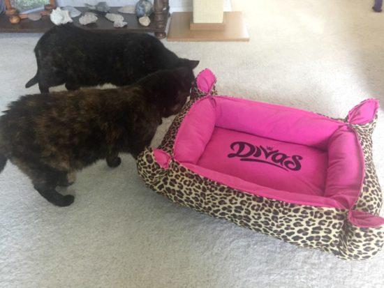 divas-cat-bed