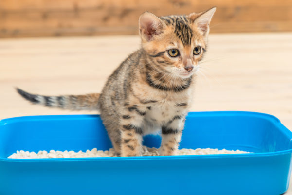 cat-vertical-pee