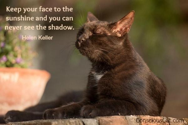 face-sunshine-cat