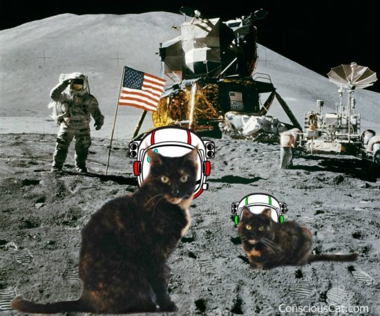 moon-landing-apollo-11-50-years