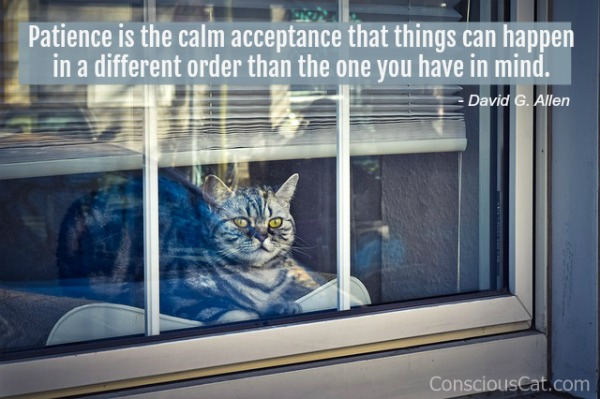 patience-cat-quote