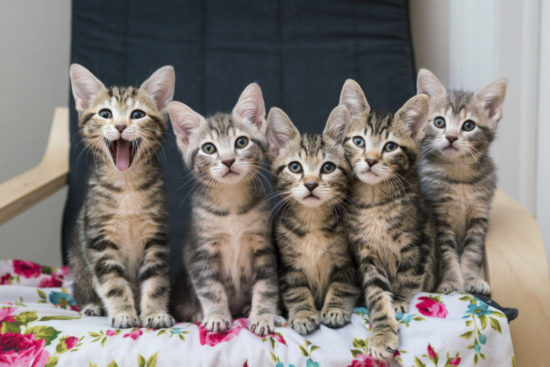 tiny-but-mighty-kittens
