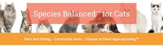 balanced-blends-cat