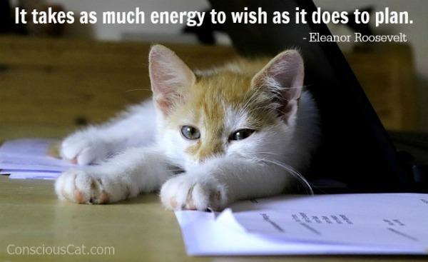 cat-desk-wish-plan