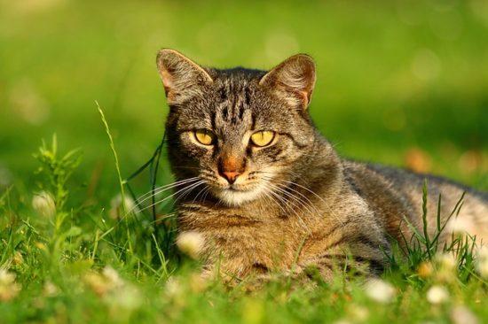 cat-grass-probiotics