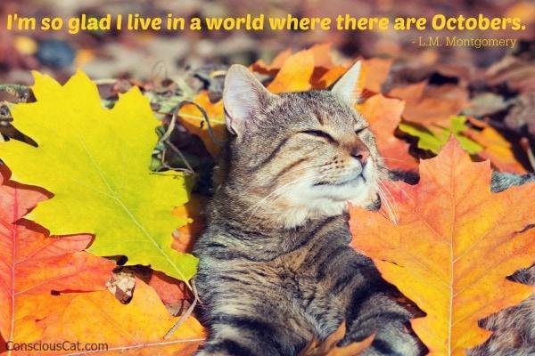 cat-fall-autum-leaves-october
