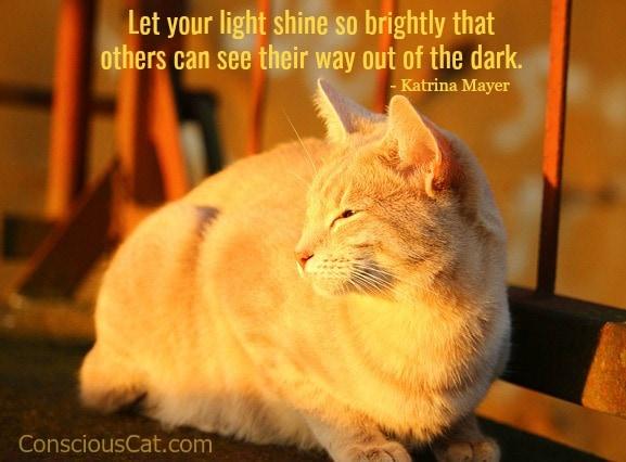 cat-sunlight