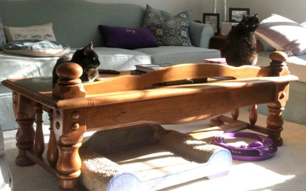 tortoiseshell-cats-on-table