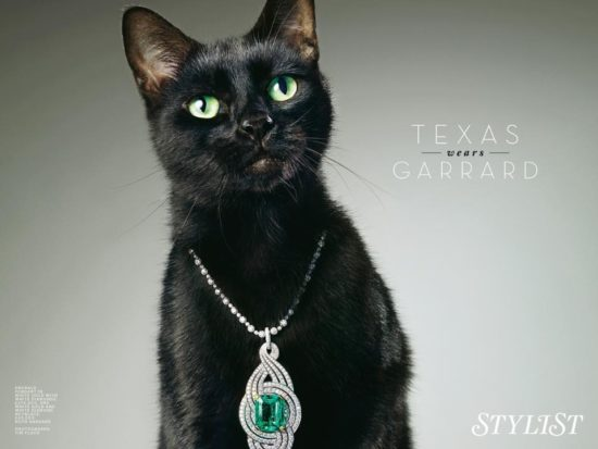 texas-movie-film-cat