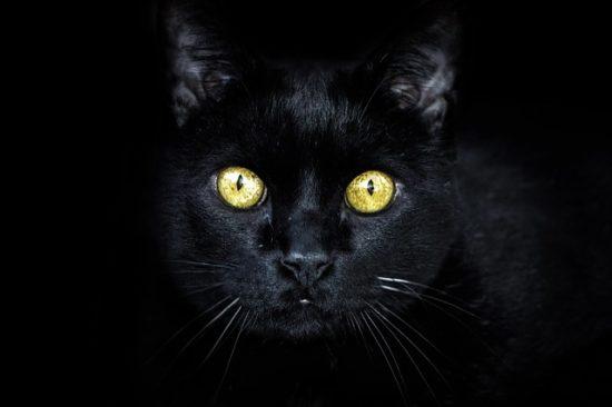 black-cat-golden-eyes