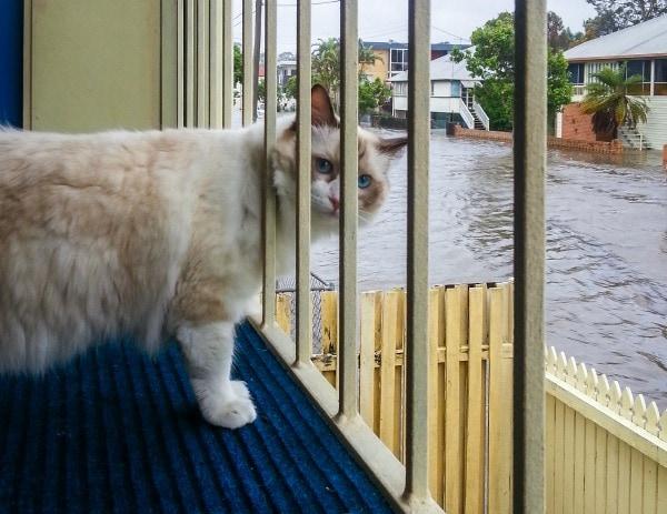 cat-flood-hurricane