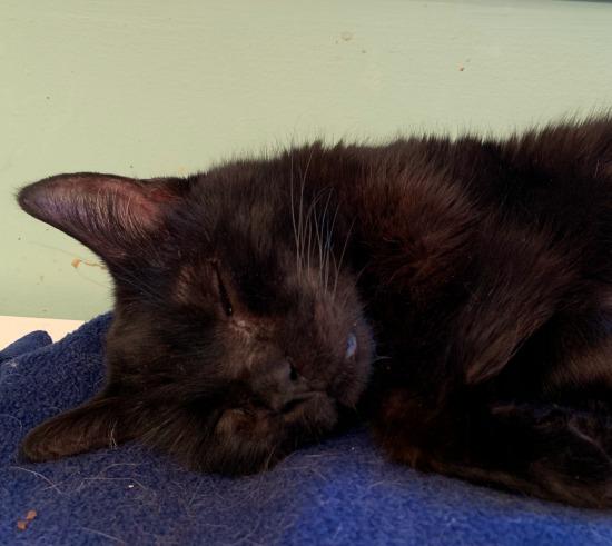 black-cat-sleeping