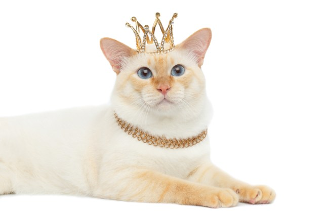 cat-crown-royalty