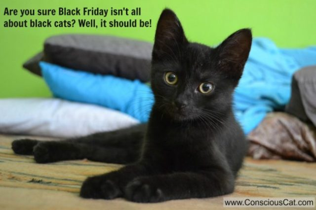 black-cat-friday