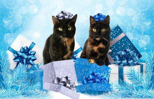 christmas-gifts-cats