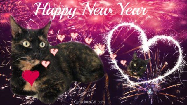 new-year-cats