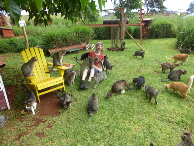 lanai-cat-sanctuary